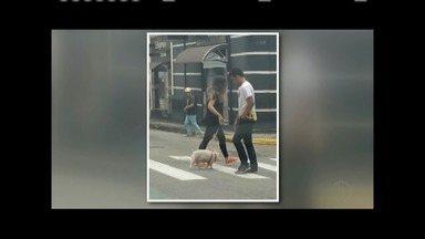 Foto de mulher com porca de estimação nas ruas de Varginha viraliza na internet - Escolha inusitada surpreendeu as pessoas.