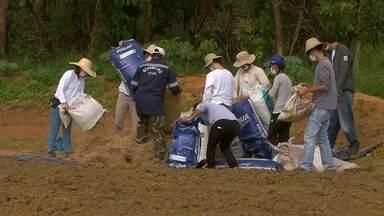 Mais de mil mudas nativas do cerrado são plantadas na barragem do Descoberto - Mais de mil mudas nativas do cerrado são plantadas na barragem do Descoberto.