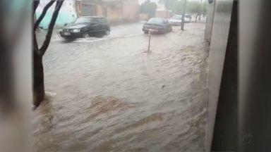 Chuva forte causa estragos em Américo Brasiliense, Casa Branca e São Carlos - Avenida de Américo Brasiliense foi afetada pela enchente; em São Carlos queda de árvore deixou moradores do Parque Sabará sem energia.