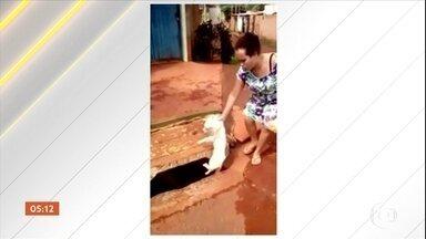 Imagens mostram mulher jogando cachorro dentro de bueiro no DF - A dona do cachorro teria se irritado após o animal depois do animal ter avançado na filha dela.