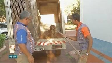 CZC de Rondonópolis não sacrifica cães por eutanásia - CZC de Rondonópolis não sacrifica cães por eutanásia