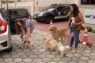 Cresce oferta de serviços de cuidador de animais - Com hospedagem, passeio e diversão, os donos de cães e gatos podem viajar tranquilos no período de férias deixando seu bicho de estimação com um cuidador de animais.