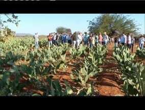 Criadores de gado leiteiro participam de curso sobre palma forrageira em Capitão Enéas - Planta é alternativa de complemento alimentar para os animais diante da falta de pasto.