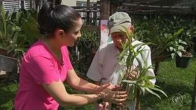 Ex-combatente da 2ª Guerra Mundial cultiva orquídeas em Votorantim - Com mais de 90 anos de idade, um ex-combatente da 2ª Guerra Mundial cultiva o hábito de cultivar orquídeas em Votorantim (SP). Os repórteres Clemilson Bortoleto e Sandra Fonseca têm informações.
