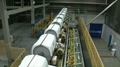 Exportação de produtos cresce 14% em Paranavaí - Suco processado de laranja é o que lidera o setor de exportação na cidade.