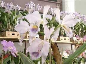 Exposição de orquídeas em Montes Claros reúne cerca de 300 espécies - Preços variam entre R$10 e R$150; visitação é gratuita e segue até o domingo (25).