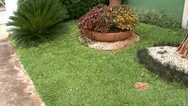 'Meu Jardim' dá dicas de como cuidar do seu gramado - Veja também a participação dos telespectadores do Paraná TV.