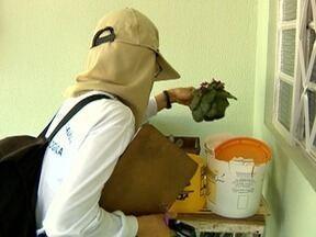 Mutirão de limpeza contra a dengue é realizado em Presidente Prudente - Trabalho foi feito na área quatro da cidade.