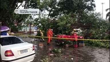 Chuva derruba árvores e causa alagamentos em Taguatinga e Ceilândia - A chuva forte em Taguatinga causou prejuízos. Árvores caíram em cima de quatro carros.