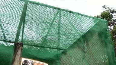 Jaulas de macacos recebem telas contra mosquitos no zoológico de Volta Redonda, RJ - Objetivo é protegê-los dos mosquitos que transmitem a doença. Sete macacos já morreram no Sul do RJ por conta da febre amarela, um deles na cidade.