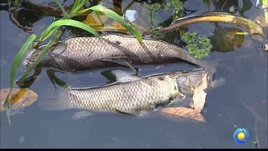 JPB2JP: Ibama divulga laudo sobre vazamento de soda cáustica no Rio Gramame - Cagepa foi multada.