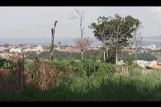 Ação em Patos de Minas promove plantio de 200 árvores na Mata do Catingueiro - Parque sofre com desmatamentos e incêndios. Plantio faz parte da ação que acontece em diversos estados e outros países.