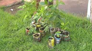 Alunos da Ufopa lançam campanha que pretende plantar 1 milhão de árvores em Santarém, PA - A campanha ambiental pretende plantar mudas às margens de rios e igarapés da região. A programação é em comemoração ao dia mundial da água.