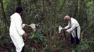 Sumiço de macacos em matas de SP dificulta pesquisa da febre amarela - Técnicos vasculharam região de Itapecerica da Serra, na Grande SP, e não encontraram bugios, os macacos que servem de hospedeiros do vírus.