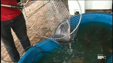 Começa hoje a feira do peixe vivo em Foz - A feira é no CTG Charrua