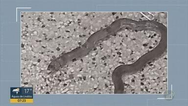 Cobra aparece em Hospital Ouro Verde de Campinas e assusta funcionários - Representante do Sinsaúde recorda que não é a primeira vez que um réptil aparece no local.