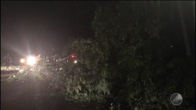 Queda de árvore causa interdição de trecho da BR-415, no sul do estado - O trânsito ficou travado nos dois sentidos da pista, pois o tronco ficou atravessado na rodovia.