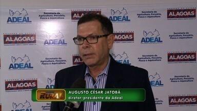 Começa no próximo mês a campanha de vacinação contra Aftosa - Este ano, país recebe status sanitário de livre com vacinação, certificado que Alagoas conquistou há 4 anos.