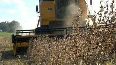 Uso de sementes não certificadas pode prejudicar produtividade da soja produzida no RS - Assista ao vídeo.