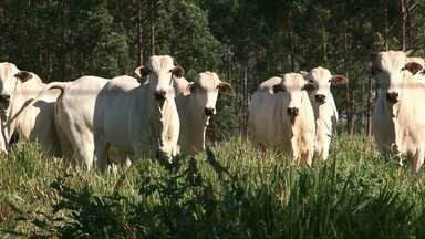 Paraná quer se tornar estado livre da Febre Aftosa sem vacinação - Em maio todos os animais abaixo de 24 meses precisam ser imunizados