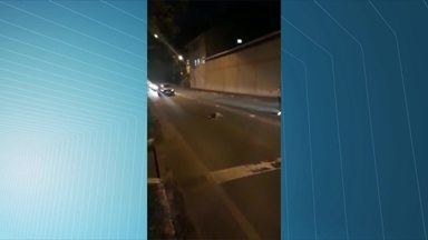 Bicho-preguiça para trânsito em rodovia no ES e é aplaudido por motoristas - O telespectador Teobaldo Schwambach enviou vídeos para a TV Gazeta. O registro foi feito na entrada da Adega Alemã Schwambach.