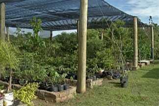 Árvores de Mogi são mapeadas - Estudo é feito por alunos de universidade.