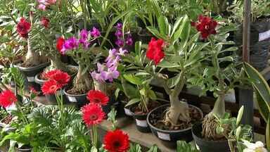 Exposição de flores em homenagem às mulheres é realizada em Santarém - Ação é desenvolvida pela Associação de Flores do Tapajós no Mercadinho da Prainha. Os preços e variedades são variados e acessíveis.