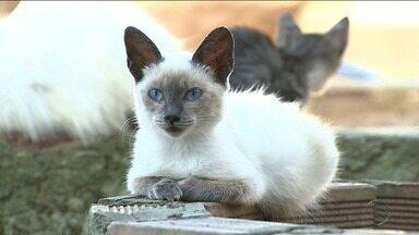 Adasfa vai realizar evento em Aracaju para arrecadas fundos - Evento tem o objetivo de arrecadar fundos e vacinar os animais resgatados pela instituição.