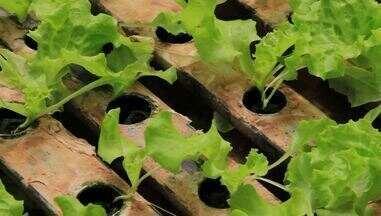 Confira algumas dicas para ter uma produção e hortaliças rentável e de qualidade - A hidroponia consiste em cultivar plantas sem solo, em equipamentos fixos com uma solução que contém água e os nutrientes essenciais para cada cultura. Ela pode gerar inúmeros ganhos para os produtores, como a economia de água e a redução no uso de agrotóxicos. Confira algumas dicas para ter uma produção de hortaliças rentável e de qualidade.