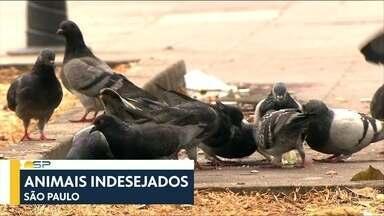 Bom Dia São Paulo - Edição de Sexta-Feira 08/06/2018 - Mortes por gripe quase triplicam em um mês em SP.Obra parada de recapeamento incompleta deixa buracos em rua da Zona Sul.
