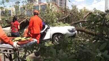Parte de árvore cai sobre carro e fere motorista - Confira mais notícias em g1.globo.com/ce