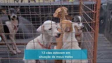 Cães que estavam abandonados em casa são resgatados em Cuiabá - Cães que estavam abandonados em casa são resgatados em Cuiabá.