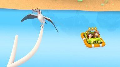 A Águia-Marinha-De-Barriga-Branca