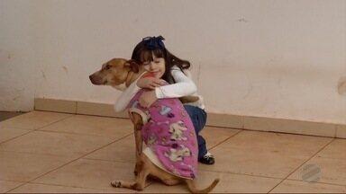 Cachorra pitbull desaparecida em Dourados é encontrada com ajuda do MSTV - O animal é idoso e tinha desaparecido.