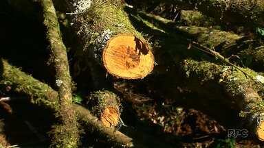 Área de desmatamento é encontrada no Jordão, em Guarapuava - É a segunda vez que focos de desmatamentos são encontrados na propriedade.