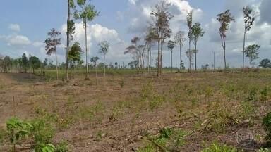 Amazônia perde área verde igual a 200 mil campos de futebol em dez meses - Segundo Imazon, aumento foi de 22% em relação ao período anterior. Os estados mais atingidos foram Mato Grosso, Pará e Amazonas.