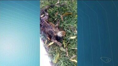Macaco é encontrado morto em bairro de Cachoeiro de Itapemirim, no Sul do ES - Animal já estava em decomposição e não é possível fazer o teste para saber se ele morreu de febre amarela.