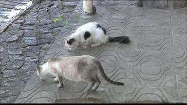 Dezenas de gatos são abandonados na UFPB e no Mercado de Oitizeiro - Após alguns mortos aparecem mortos na prefeitura, outras pessoas denunciaram abandono e maus tratos com esses animais.