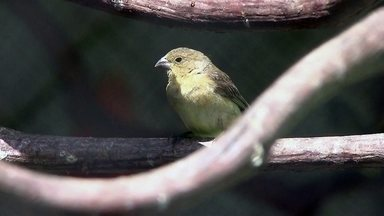 Aves que sofreram violência são soltas em Reserva Ecológica - Aves que sofreram violência são soltas em Reserva Ecológica
