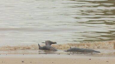 Análise química aponta o balneário da Fazendinha como impróprio para banho - Cerca de 60% da água é contaminada por coliformes fecais, segundo estudo do Imap. Local já tinha sido condenado duas vezes em 2016. Em Macapá, apenas o Curiaú foi aprovado para julho.
