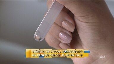 Focos do Aedes aegypti crescem 48,4% em SC e 73 municípios são considerados infestados - Focos do Aedes aegypti crescem 48,4% em SC e 73 municípios são considerados infestados