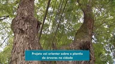 Programa Cidade das Árvores vai orientar população sobre preservação e plantio de espécies - Programa foi lançado na sede da TV Morena, na manhã desta terça-feira (3).