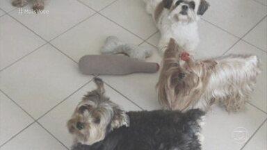"""Cachorro é um dos cinco """"C's"""" em condomínios - Confusões entre cães podem acabar em tragédia e dor. Entenda."""