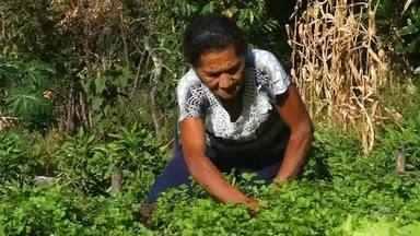 Estudantes ensinam a agricultores novas técnicas de plantio - Saiba mais em g1.com.br/ce