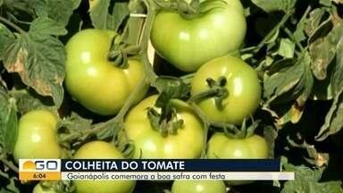 Com grande colheita e geração de empregos, Goinápolis prepara Festa do Tomate - Cidade é conhecida como a capital nacional do fruto.
