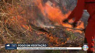 Mais de 4 mil queimadas são registradas em Minas Gerais em junho, dizem bombeiros - Número de queimadas é grande no estado e maioria dos incêndios são criminosos.