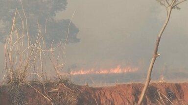 Incêndio destrói fazenda de pesquisas científicas que tem mais de 700 hectares - Uma fazenda de pesquisas científicas, da Secretaria de Agricultura do Estado foi destruída por um incêndio, neste domingo (29), em Andradina (SP).