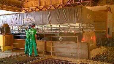Variação no preço diminui venda de soja no RS - Agricultores fazem reserva do grão para próxima safra.
