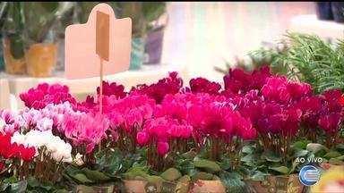Festival das Flores de Holambra acontece em Shopping na Zona Norte de Teresina - Festival das Flores de Holambra acontece em Shopping de Teresina
