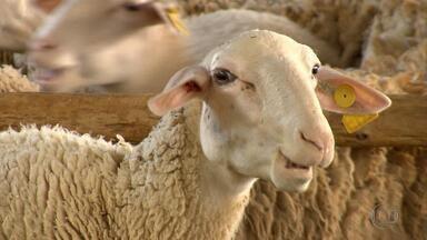 'Pelas Cozinhas de Minas' tem linguiça de formiga, criação de ovelas e troca de cidade - Reportagem percorreu 7 mil quilômetros por várias cidades do estado.